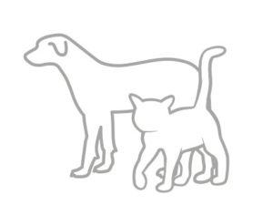 Taurine pour chien et chat