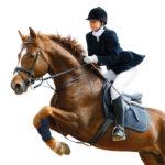 Cheval-Horse-Cox