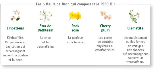 Les 5 fleurs de Bach qui composent le RESCUE