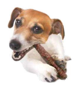 Chien qui mange un stick bioli