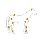 squelette-cheval