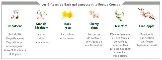 Les 6 fleurs de Bach qui composent la Rescue Crème