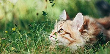 Oskan : produits naturels pour chats