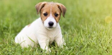 Oskan : produits naturels pour chiens