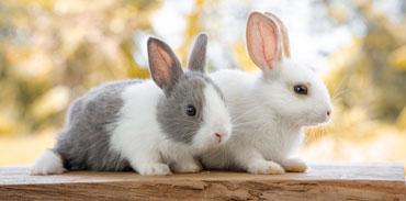 Oskan : produits naturels pour lapins